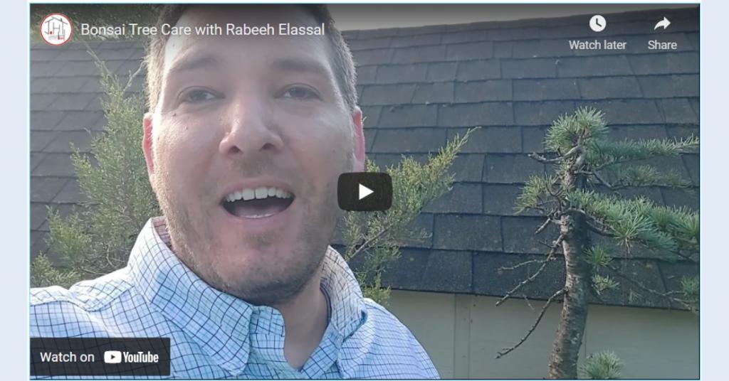 Bonsai Tree Care with Rabeeh Elassal